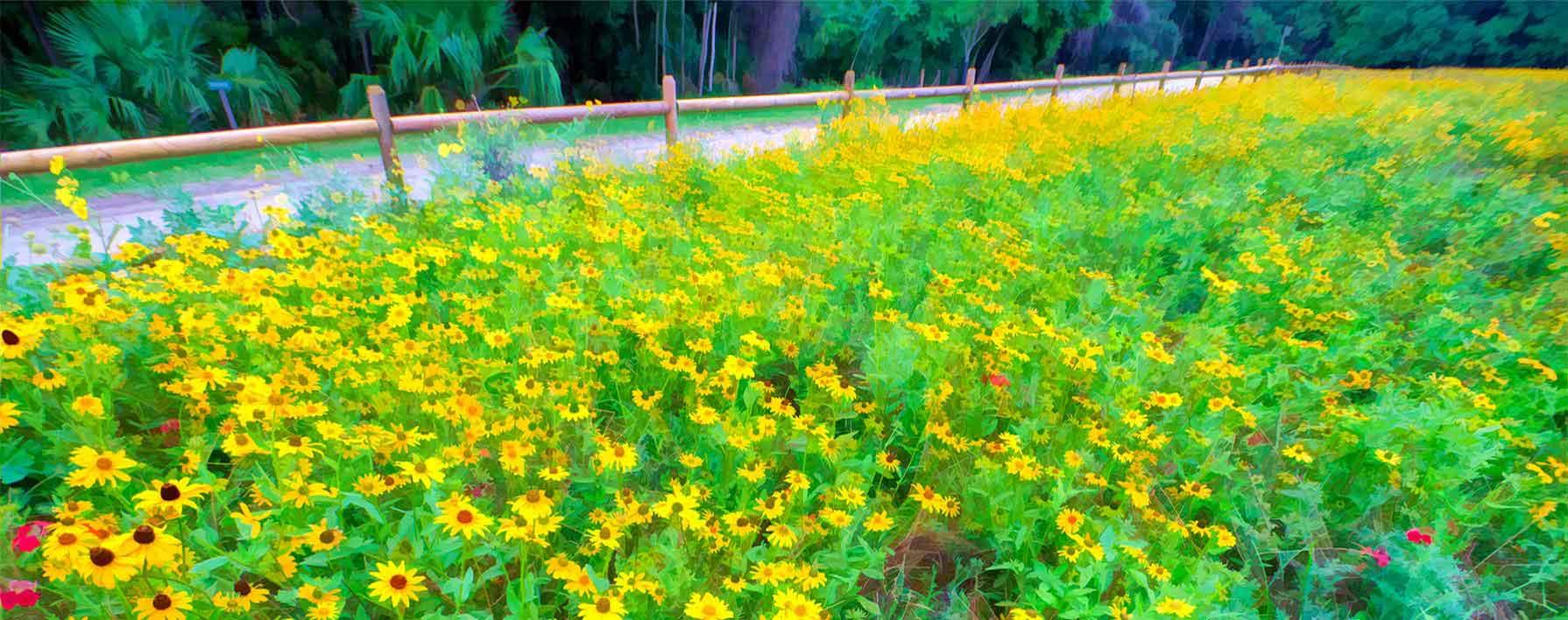field-flowers-revised2