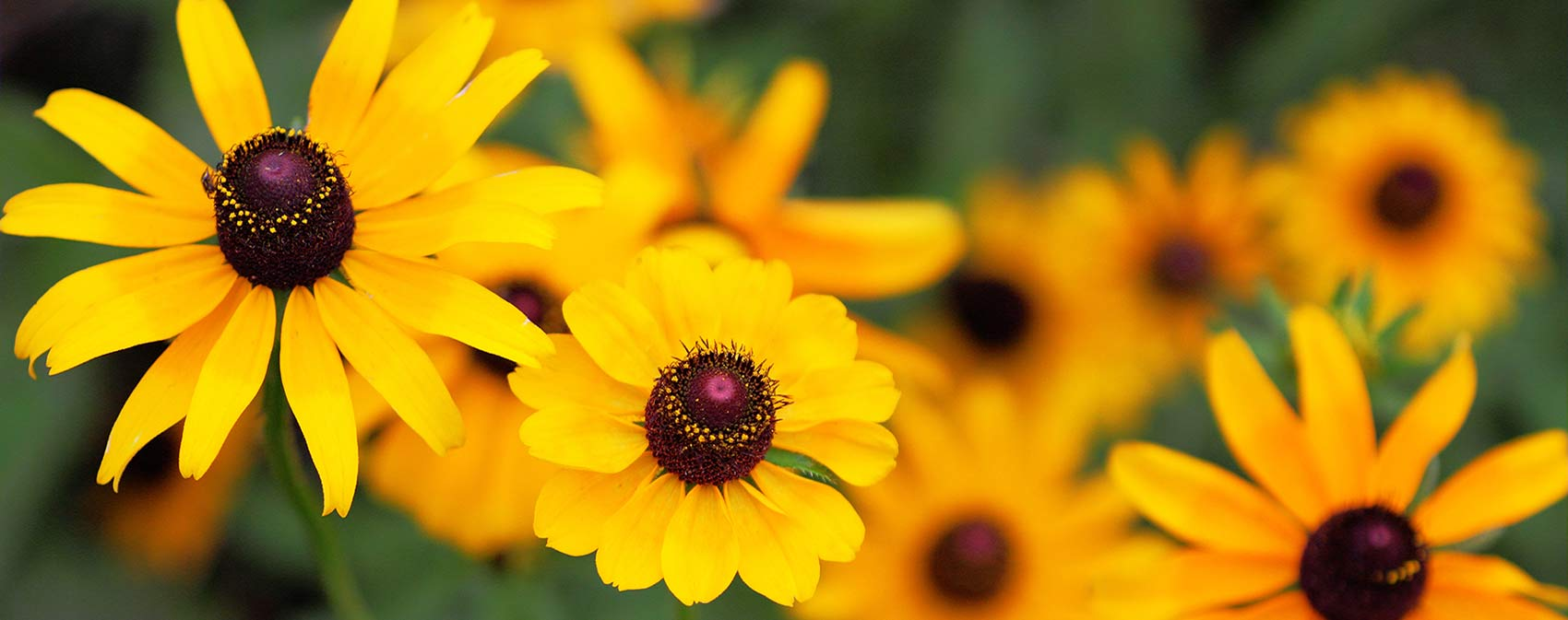 yellow-flowers-revised